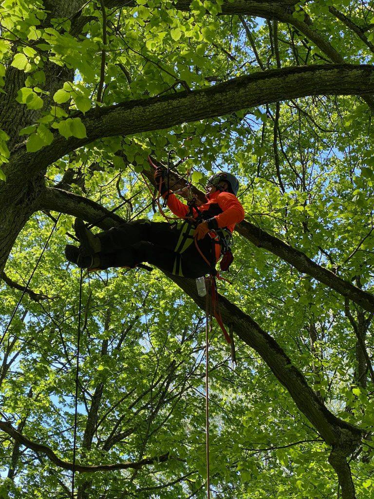 Arboristas medyje